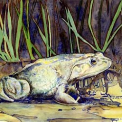 Bullfrog 12x16