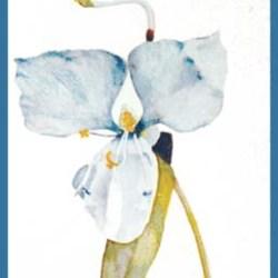 "Day Flower 8"" 10"""
