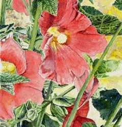 "Peach Colored Hollyhock 7"" x 10"""