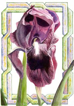 "Iris #3 7"" x 10"""