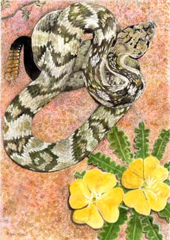 "Blacktailed Rattlesnake 7"" x 10"""