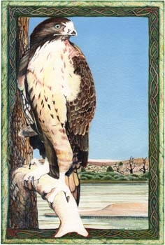 "Red Tailed Hawk 8"" x 12"""