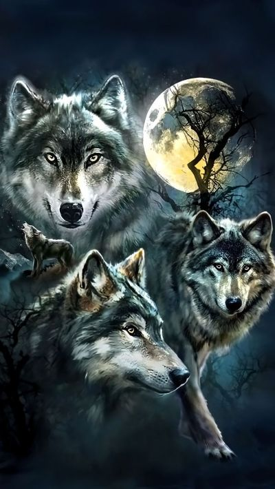 Wolf Wallpaper For iPhone | 2019 3D iPhone Wallpaper
