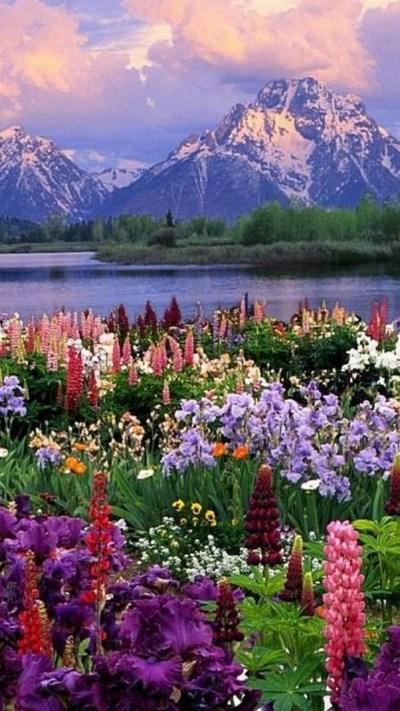 Wallpapers Spring Nature | 2019 3D iPhone Wallpaper