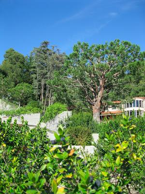 The Getty Villa, 2/5/2012