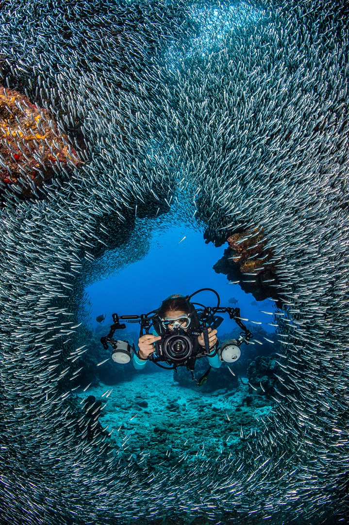 Thrilling    Silver Rush    an added Summer Dive Adventure in the Cayman     An underwater photographer moves through the schooling silversides at  Devil s Grotto in Grand Cayman  Photo