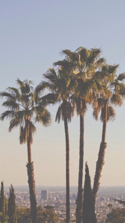 iphone palm trees backgrounds palms wallpapers lockscreen HomeScreen ssomebackgrounds •