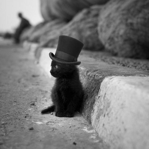 OMG..!</p><br /> <p>This cat has the best fashion sense in the whole world..!