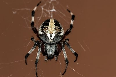 クモの糸QMONOS
