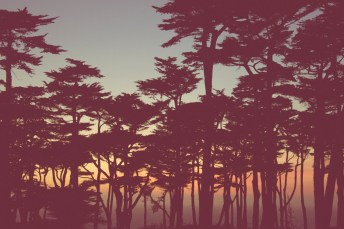 foresty sunset