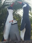 Penquins in El Salvador? This is for you Pam!