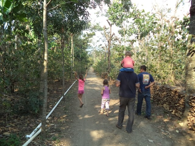 Coffee plantation. Banana trees are used to provide shelter to the coffee plants.