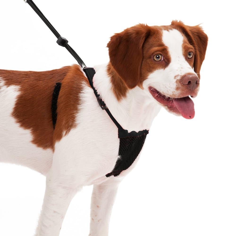Exquisite Dog Harness No Pull Dog Harness No Pull Dog Harness Pitbull 2018 Reviews No Pull Dog Harness Amazon No Pull Dog Harness bark post No Pull Dog Harness