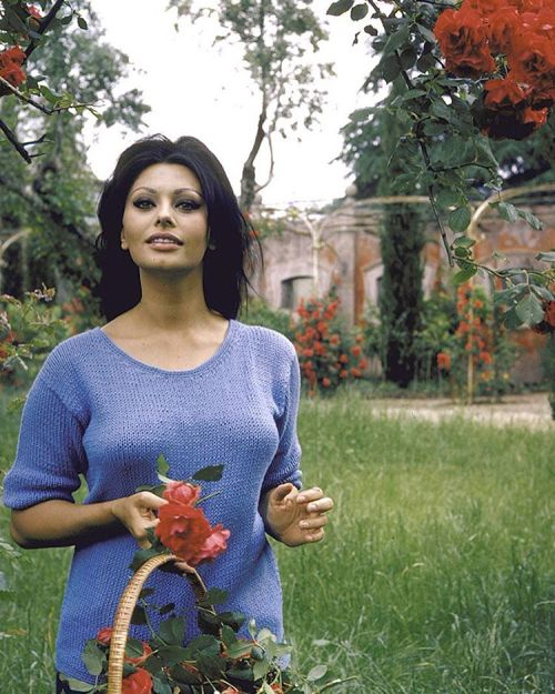 life:  Sophia Loren picks roses at her villa in Marino, Italy, 1964. (Alfred Eisenstaedt—The LIFE Picture Collection/Getty Images) #LIFElegends #1960s #SophiaLoren