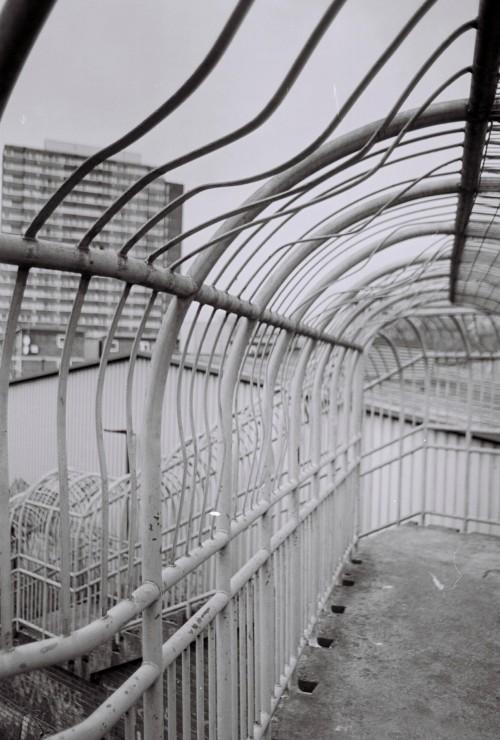thelondonvagabond:  Reinadelaluna-London-35mm-2015