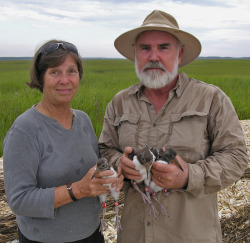 New blog post at Cool Green Science about Doris and Pat Leary's accomplishments in bird resighting. http://blog.nature.org/science/2013/08/05/banded-birds-citizen-science/