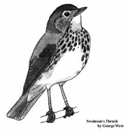 New paper on weird molt patterns in young Swainson's thrush during their first winter in Ecuador. Larson, K.W., Smith, J.A.M., Merker, S.A., Reitsma, L.R. 2013. Plasticity in the Swainson's Thrush (Catharus ustulatus) First Pre-basic Molt. North American Bird Bander. 38(1):28-30. Read it here: http://bit.ly/150qR3N