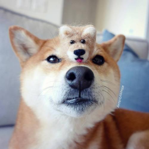 Medium Crop Of Call Of Doge