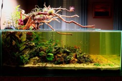 Small Of 200 Gallon Aquarium