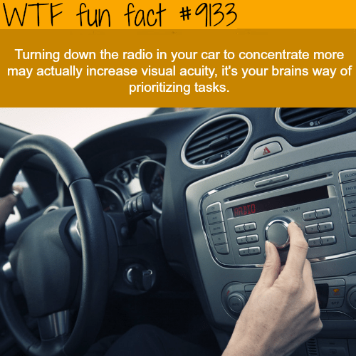 WTF Facts   funny  interesting   weird facts Why we turn down the radio when we are lost   WTF fun fact