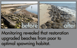 "I'm presenting on Delaware Bay horseshoe crab habitat restoration this week at the Coastal Estuarine Research Federation conference in the ""Linking species and habitat conservation for global horseshoe crab populations"" symposium."