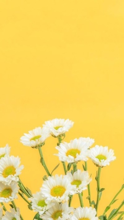 daisy background | Tumblr