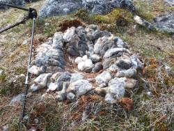 The Amazing Lemming: The Rodent Behind the Snowy Owl Invasion? http://bit.ly/1bPNxG9
