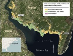 New article in Ocean & Coastal Management assessing the impact of the historic practice of marsh farming on present-day marsh condition in the Delaware Bay.