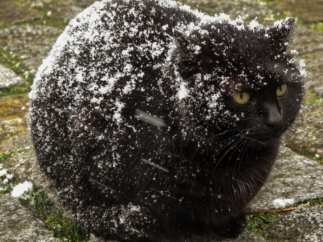 Fullsize Of Cat Has Dandruff