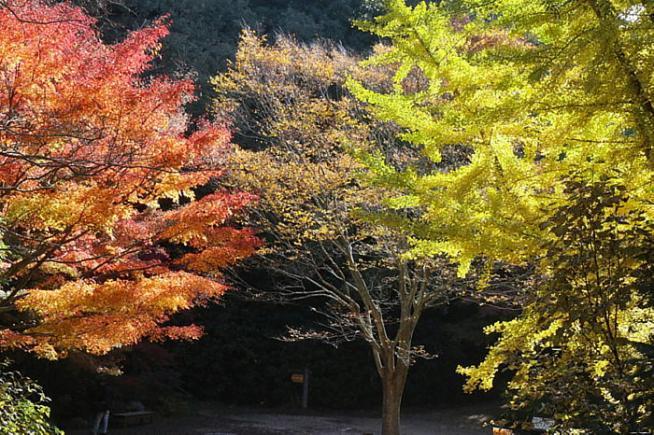 森林植物園03