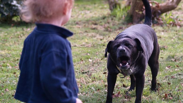 Стая собак покусала детей в Саратовской области.