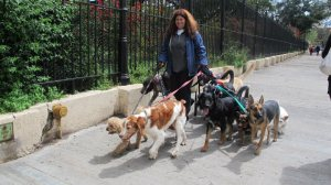 This was actually a small number of dogs, compared to most.
