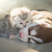 Protect Pets Against  Heat