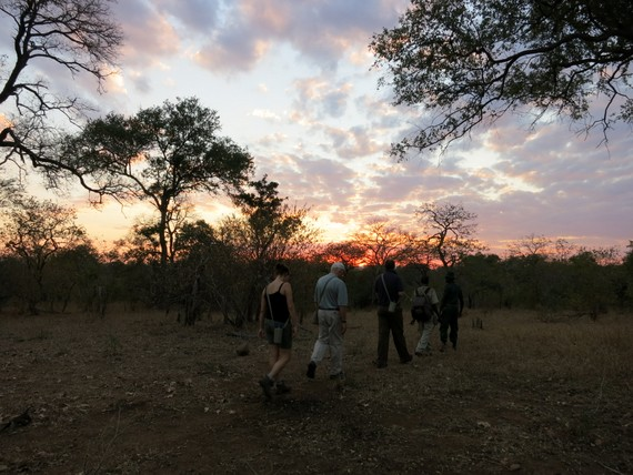Malawi Walking Safaris 
