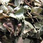 Lyme Away Herbal Tea Blend