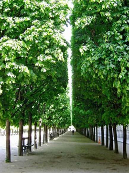 Palais-Royal 6