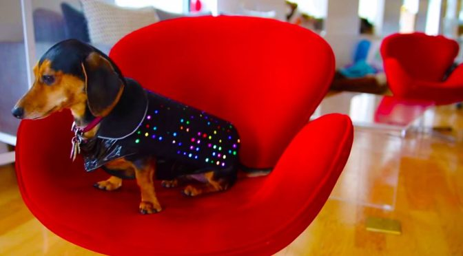disco-dog-vest-helps-lost-dogs-1