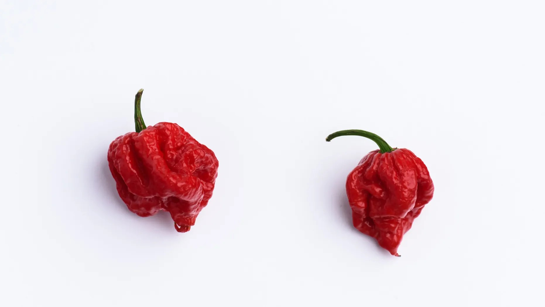 Grande Chips Are Made Carolina Reaper Which May Be Hottestin News Anchor Vomits After Eating Hottest On Live Tv Carolina Reaper Madness Chip Youtube Carolina Reaper Madness Chip India nice food Carolina Reaper Madness Chip