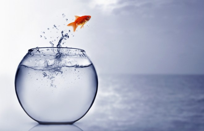 Goldfish jumping into the sea