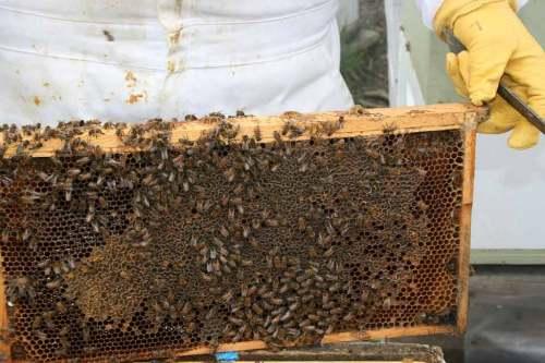 mel-abelhas-red