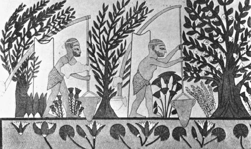 Theban استفاده از ابزار آبیاری ابتدایی به اسم شادوف – تصویر شده بر دیوار مقبره ی