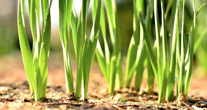 Sembrar semillas de césped