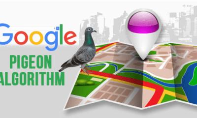 google-pigeon-algorithm