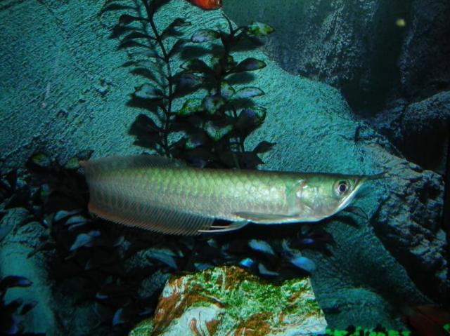Fish aquarium in nj marine fish for sale in new jersey for Saltwater aquarium fish for sale