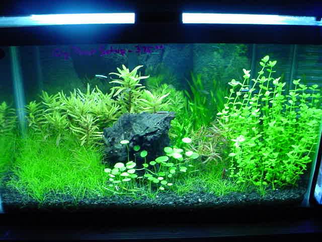 Natural aquarium and natural aquarium supplies New Jersey