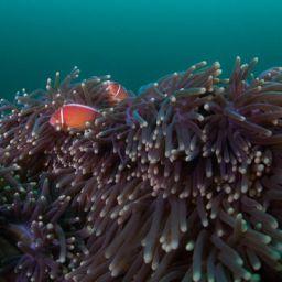 Wide angle reefscape shots of Anilao