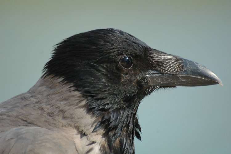 Tue Cent Twosday:  Bird, a Poem