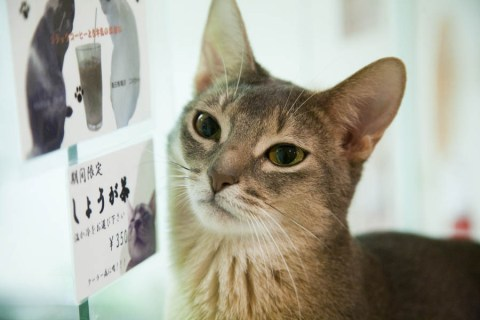 CatCafe011