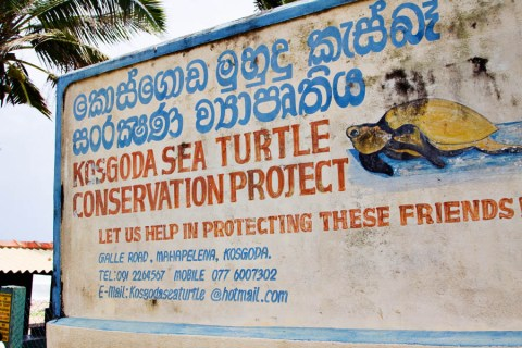 TurtleConservation001