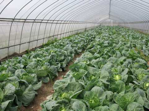 organic farm greenhouse